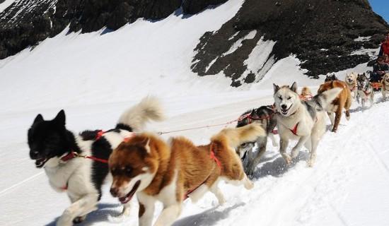 Dog Sled Ride Glacier 3000