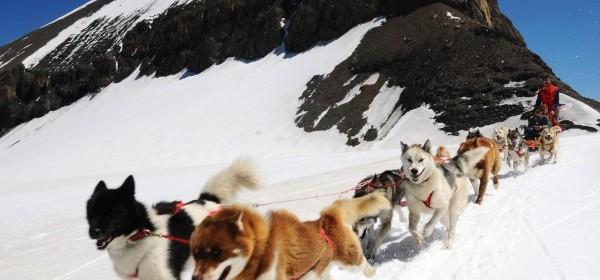 Hundeschlitten Fahrten